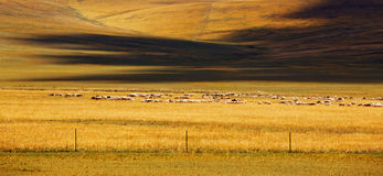 Pastoral. This landscape look like pastoral stock photography