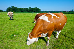 Pastoral Royalty Free Stock Images