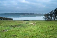 pastoral fotografie stock libere da diritti