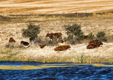 pastoral Photos stock