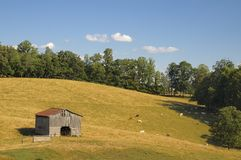 Pastoral American Cattle Farm Scene. A pastoral American Cattle Farm scenic in the rolling hills of Grainger County, Tennessee, USA in July.  Golden fields with Royalty Free Stock Images