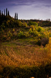 Pastoral Autumn Landscape Environment Royalty Free Stock Images