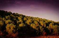 Pastoral Autumn Landscape Environment Royalty Free Stock Photography