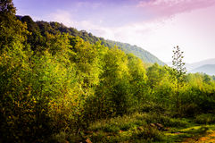 Pastoral Autumn Landscape Royalty Free Stock Photography