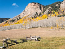 Pastoral Autumn scenery, western Colorado Stock Images