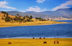 Pastoral bulgarian landscape. Pastoral panoramic bulgarian landscape with wild horses near Batak dam lake stock photography