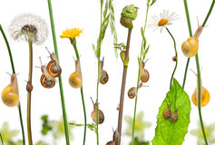 Pastoral composition of flowers and Garden snails Royalty Free Stock Image