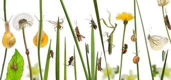 Pastoral composition of flowers and insects in front of white background royalty free stock photography
