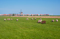 Pastoral Dutch landscape. Stock Photo