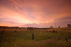 Pastoral field Stock Photos