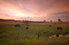 Pastoral field Royalty Free Stock Images