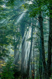Pastoral Forest Royalty Free Stock Photos
