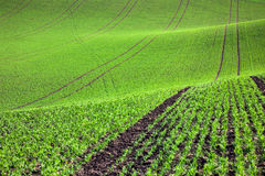 Pastoral green field in beautiful hills, abstract background Royalty Free Stock Image