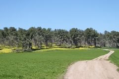 Pastoral Grove Landscape. Pastoral landscape of a grove of very tall pine trees and green field with road over a background of the blue sky Royalty Free Stock Images