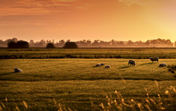 Pastoral hollandais au lever de soleil Photographie stock libre de droits