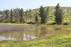 Pastoral Lake Landscape. Pastoral lake, trees, green field and mountain landscape royalty free stock photography