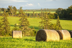 Pastoral Landscape Royalty Free Stock Images