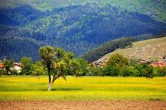Free Pastoral Landscape Stock Photos - 24799723