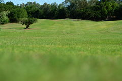 Pastoral landscape,. Tree alone in well maintained meadow stock photo