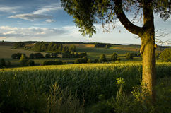 Pastoral Landscape. A pastoral landscape showing a solid tree in the foreground and a corn field highlighted by a setting sun. The warm feeling generated by the stock images