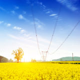 Pastoral landscape, large tracts of canola flower and pylons Stock Image