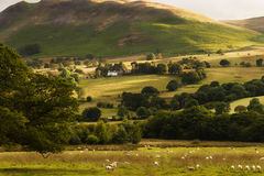 Pastoral Peace in Borrowdale, Lake District England Royalty Free Stock Photos