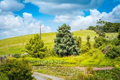 Pastoral rural landscape with overgrown lily pond at the sloped of lush green rolling hills. stock images