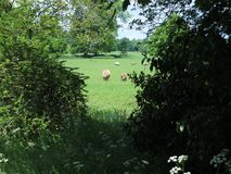 Pastoral scene Stock Photos