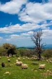 Pastoral scene Royalty Free Stock Image