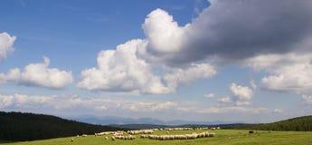 Pastoral scene. A pastoral scene in Romania stock photography