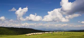 Pastoral scene. A pastoral scene in Romania royalty free stock image