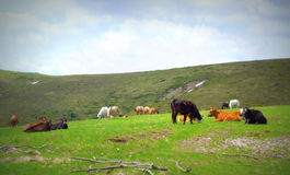 Pastoral scene Royalty Free Stock Images