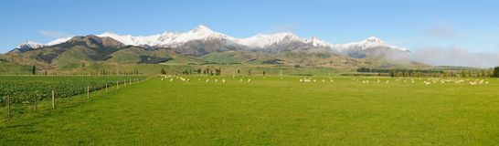 Pastoral scene in New Zealand`s South Island Stock Photography