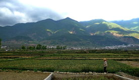 Pastoral scenery. Idyllic scenery, the fusion between nature Stock Image