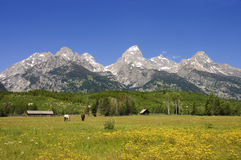 Pastoral sceni of the Tetons Royalty Free Stock Photography