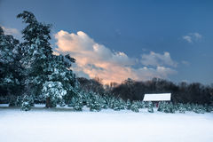 Pastoral snow scene. Pastoral scene, as twilight dawns, of an old barn, surrounded by snow covered Christmas trees in the Blue Ridge Mountains of Virginia stock photography