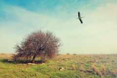 Pastoral spring landscape with lonely tree and the flying stork. Stock Images