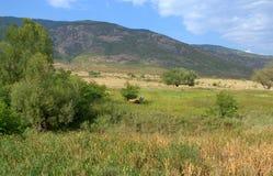 Pastoral summer landscape Royalty Free Stock Image