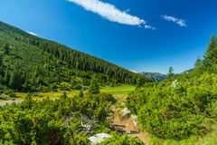 Pastoral summer scenery in the mountains Stock Photos