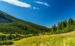 Pastoral summer scenery in the mountains Royalty Free Stock Image