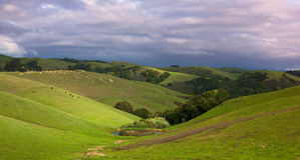 Pastorale helling met vee in de lente Royalty-vrije Stock Foto