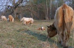 Pastorale idylle Royalty-vrije Stock Foto