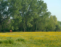 Pastorale weide Royalty-vrije Stock Foto