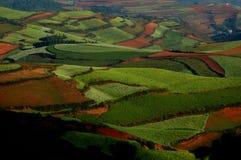 pastoralism obraz royalty free