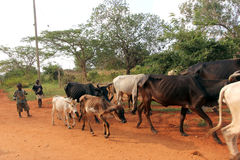 Pastoralism Royalty Free Stock Photography