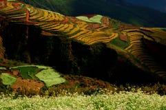 pastoralism2 Zdjęcie Stock