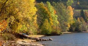 Pastoralna jesień w czarnym lesie Fotografia Stock