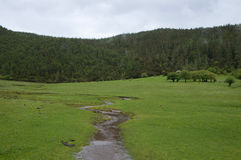 pastoralna sceneria Obrazy Royalty Free