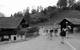pastoralny Zdjęcie Royalty Free