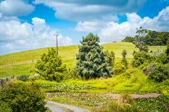 Pastoralny wiejski krajobraz z porosłym leluja stawem przy sloped bujny zieleni toczni wzgórza obrazy stock